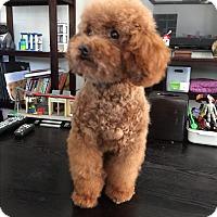 Adopt A Pet :: Kevin - Temple City, CA