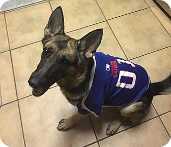 German Shepherd Dog Mix Dog for adoption in Greeneville, Tennessee - Allie (Cat Friendly)