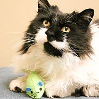 Adopt A Pet :: Zelda - Chicago, IL