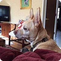 Adopt A Pet :: Snoopy - Bernardston, MA