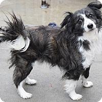 Adopt A Pet :: Lennon - Ozone Park, NY