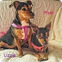 Adopt A Pet :: Lizzie and Pixie - Jasper, IN