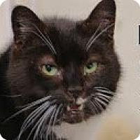 Adopt A Pet :: Rex>^.,.^< $35 adoption - Union Lake, MI