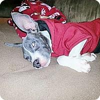 Adopt A Pet :: Marie - Reisterstown, MD