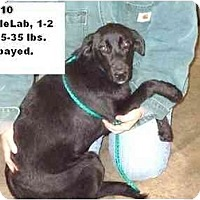 Adopt A Pet :: # 693-10 - ADOPTED! - Zanesville, OH