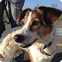 Adopt A Pet :: Rover - Grand Rapids, MI
