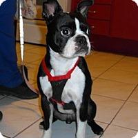 Adopt A Pet :: Baxter - Hamilton, ON