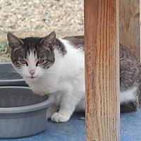 Adopt A Pet :: ALYSSA - San Pablo, CA
