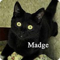 Adopt A Pet :: Madge - Warren, PA