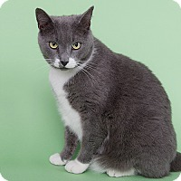 Adopt A Pet :: Ringo - Wilmington, DE