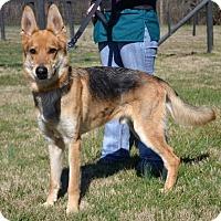 Adopt A Pet :: Thor - Midland, VA