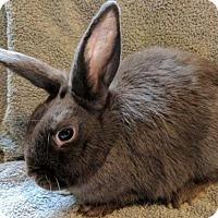 Adopt A Pet :: *OLIVIA - Sacramento, CA