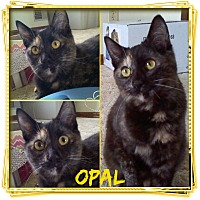 Adopt A Pet :: Opal - Jeffersonville, IN