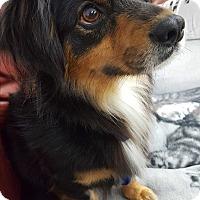 Adopt A Pet :: Reece - La Mirada, CA