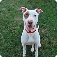 Adopt A Pet :: Chico - Aubrey, TX