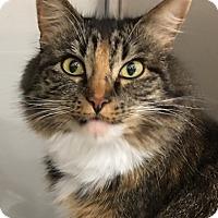 Adopt A Pet :: Fuzzy - Buhl, ID