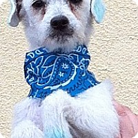 Adopt A Pet :: Tommy - Temecula, CA