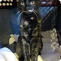 Adopt A Pet :: Sophie - Long Beach, CA