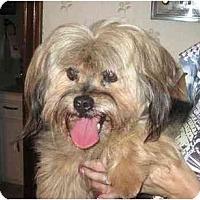 Adopt A Pet :: Denny - Conroe, TX
