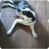 Adopt A Pet :: Lady - Alliance, NE