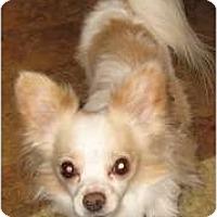 Adopt A Pet :: Chico - Cleveland, OH