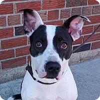 Adopt A Pet :: MATILDA playful girl - Durham, NH