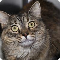 Adopt A Pet :: Mitzi - Lombard, IL