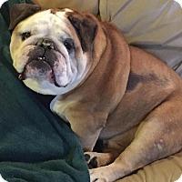 Adopt A Pet :: Gary - Decatur, IL