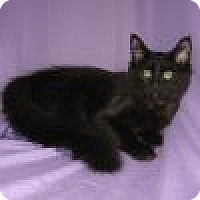 Adopt A Pet :: Onyx - Powell, OH