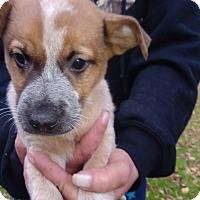 Adopt A Pet :: Art - Kendall, NY