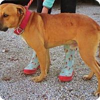 Adopt A Pet :: Trooper - Cincinnati, OH