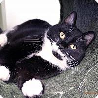 Adopt A Pet :: Keisha - Paris, ME