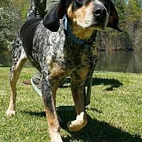 Adopt A Pet :: Smokey - Temple, GA
