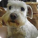 Adopt A Pet :: Finlay