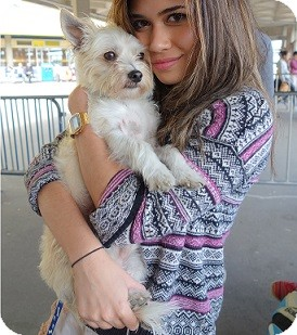 Maltese/Chihuahua Mix Dog for adoption in Hamilton, Ontario - Sidney