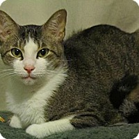 Adopt A Pet :: Rafe - Seminole, FL