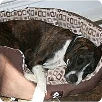 Adopt A Pet :: Boone - Bryan, TX