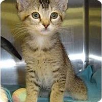 Adopt A Pet :: Spunky - Modesto, CA