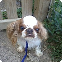 Adopt A Pet :: Bridget - Cumberland, MD