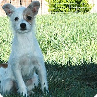 Adopt A Pet :: Lina - California City, CA