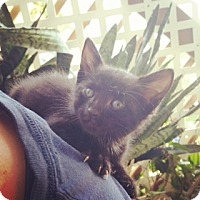 Adopt A Pet :: Scooby-Doo - Ft. Lauderdale, FL