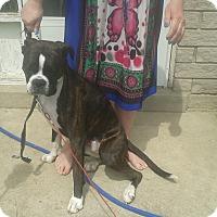 Adopt A Pet :: Bubaloo(Roo) - Tillsonburg, ON