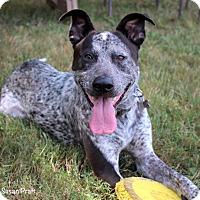Adopt A Pet :: Jaeger - Bedford, VA