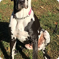 Adopt A Pet :: Oreonna - Hanover, MD