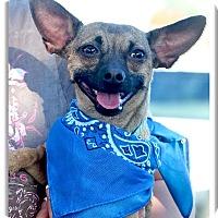 Adopt A Pet :: Ike looking for love - Sacramento, CA