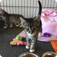 Adopt A Pet :: Julian - Fountain Hills, AZ