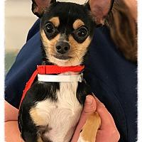 Adopt A Pet :: T-Rex - Los Alamitos, CA