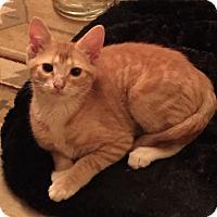 Adopt A Pet :: Cruiser - Jackson, NJ