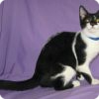 Adopt A Pet :: Pecos - Powell, OH