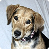 Adopt A Pet :: Esther - in Maine, PENDING - kennebunkport, ME